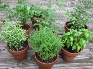 grow-a-simple-herb-garden1